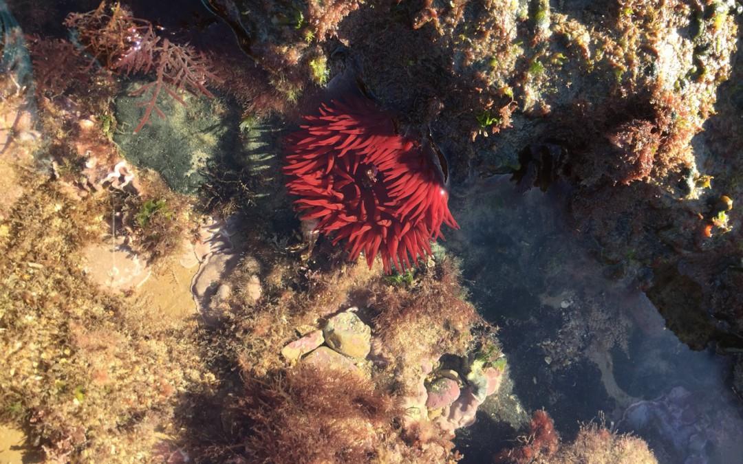 EPI des 4èmes : découvrir la biodiversité pour mieux la protéger